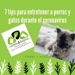 7 tips para entretener a perros y gatos durante la cuarentena