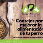 Como mejorar la alimentación de tu perro